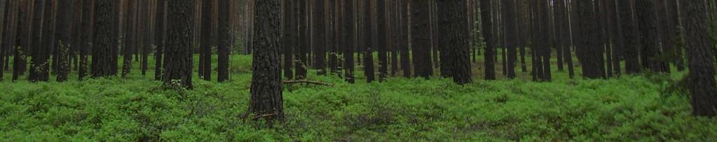 forest-honefoss